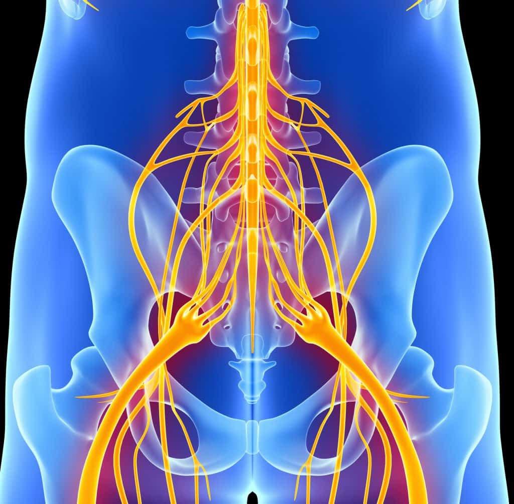 Lage rugpijn en het neurologisch model
